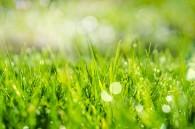 spring-grass-in-sun-light